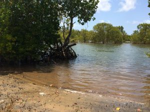 Mangrove Trees by Robinson Island water's edge